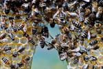 Bienen-bauen